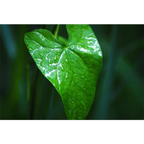 Leaf - close up fotografi fra Wolfdesign