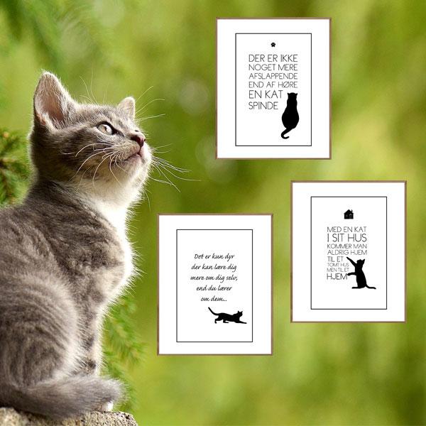 Katte sampack - 3 katte tekst plakater fra Wolfdesign