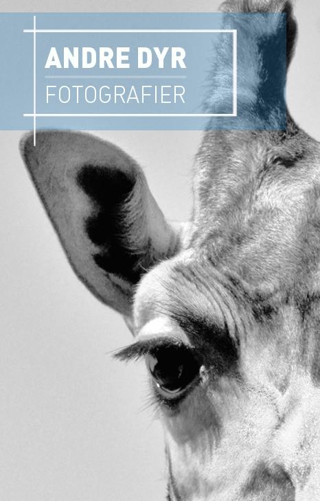 Fotografier er eksotiske dyr i søde og sjov situationer