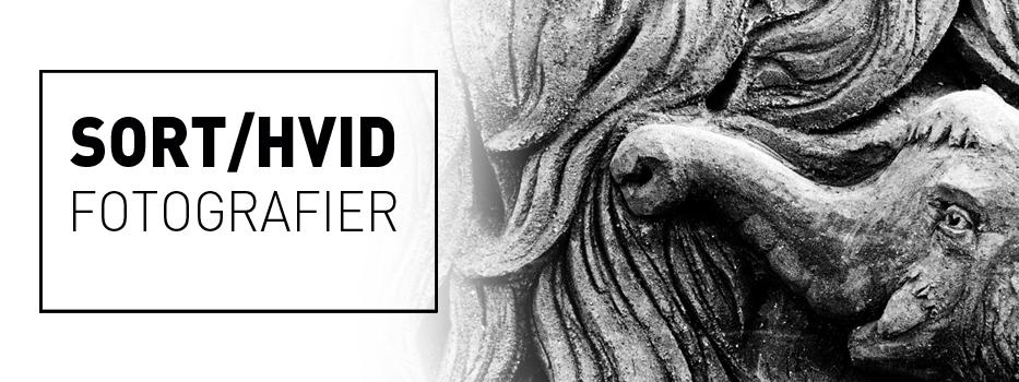 sort hvid fotografier fra Wolfdesign - billeder til din stue